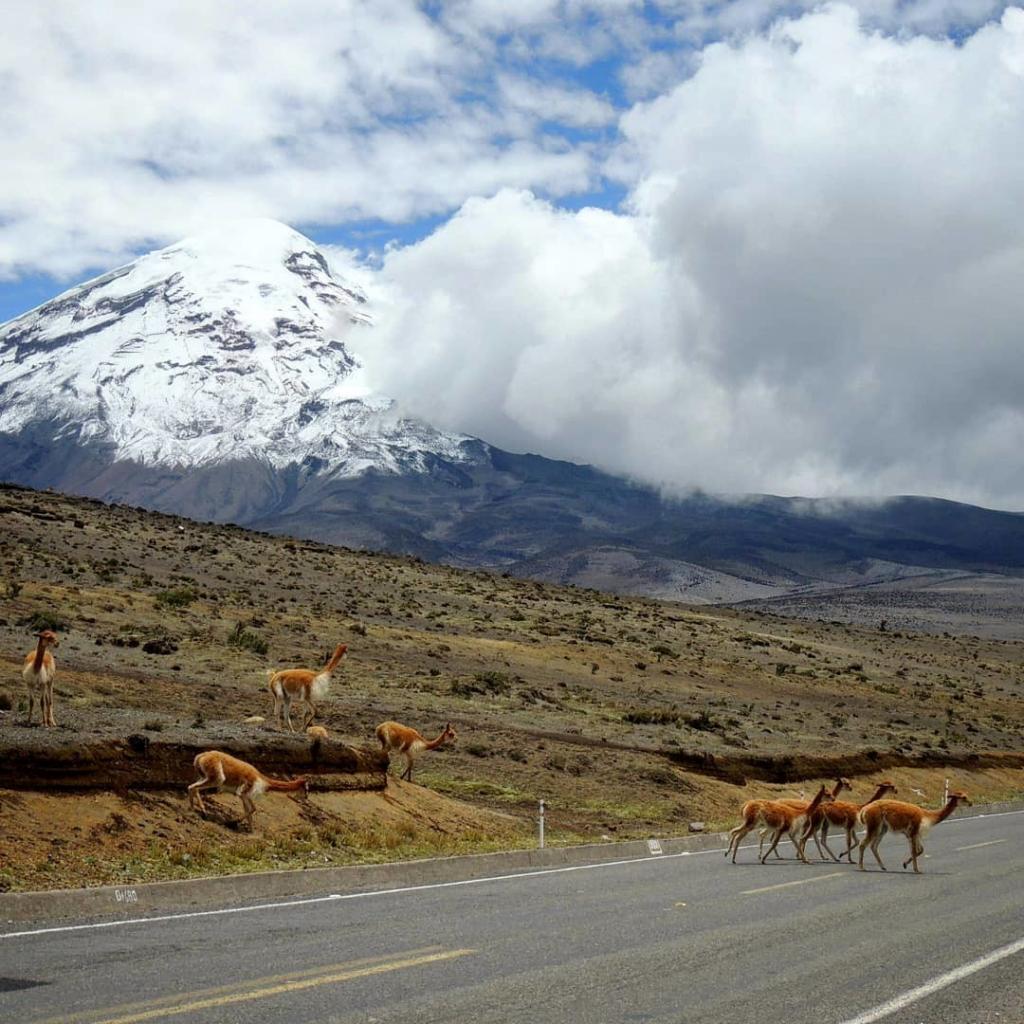 Un espectáculo natural maravilloso a los pies del majestuoso Chimborazo