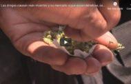 Video ONU: Cada vez hay más drogas, más consumidores y más muertes