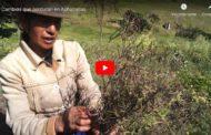 Video: Ayuda de ONG a Achupallas Chimborazo