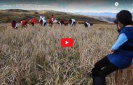 Video: El ritual del Jahuay En Chimborazo