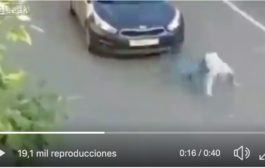 Video: #INTERNACIONAL Hombre es ATROPELLADO y se levanta como si nada.