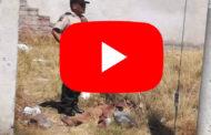Video: Muerte violenta en Riobamba.