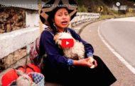 Video: COMO ACAMPAR CORRECTAMENTE | NANCY RISOL