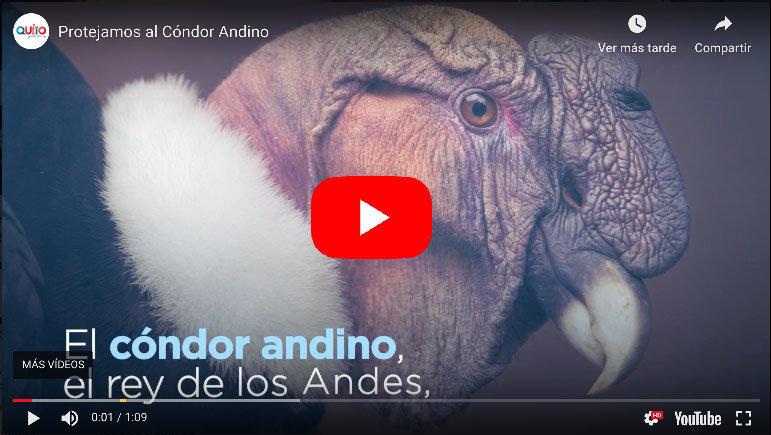 Photo of Video: El CÓNDOR está en Peligro Crítico de EXTINCIÓN.