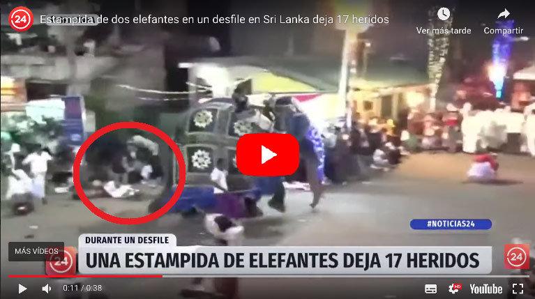 Video: Estampida de dos ELEFANTES en Sri Lanka deja 17 HERIDOS
