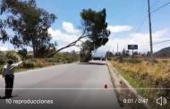 Video: Momento en que derriban un ARBOL habitantes de CALPI.