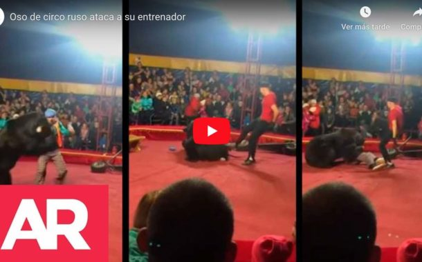 Video: Un oso de circo atacó a su domador frente a familias horrorizadas