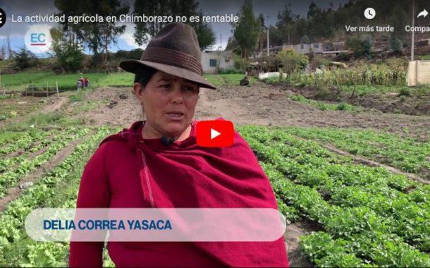 VIDEO: La actividad agrícola en Chimborazo no es rentable
