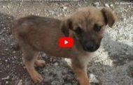 VIDEO: La Tierna Historia de un rescatado Riobamba Gualaquiza MOLLY