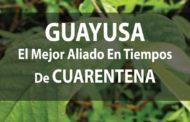 GUAYUSA, el MEJOR aliado en tiempos de CUARENTENA (VIDEO)