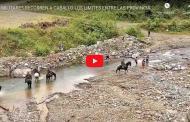 VIDEO: Militares recorren a caballo los límites entre Chimborazo y GUAYAS