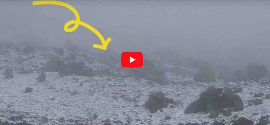 VIDEO: Lobo captado en Chimborazo